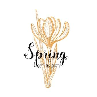 Lettrage fait à la main - le printemps arrive bientôt. crocus dessiné à la main vintage. esquisser. fleurs de printemps.