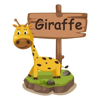 Lettre alphabet animal g pour girafe