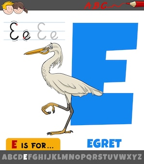 Lettre e de l'alphabet avec personnage animal oiseau aigrette dessin animé