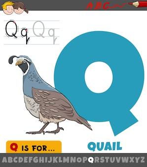 Lettre q de l'alphabet avec caractère animal oiseau caille
