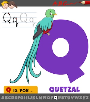 Lettre q de l'alphabet avec caractère animal oiseau quetzal