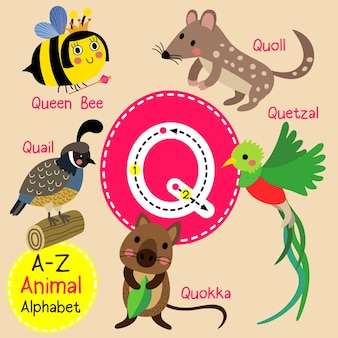 Lettre q zoo alphabet