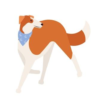 Lévrier ou lévrier. joli chien de chasse mignon avec un pelage court isolé sur fond blanc. magnifique animal domestique de race pure ou animal de compagnie portant un foulard. illustration vectorielle de dessin animé plat.