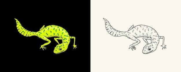 Lézard des murailles d'ibiza léopard commun ou gecko à queue grasse tacheté reptiles exotiques animaux sauvages dans la nature