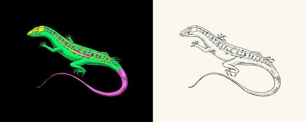 Lézard de sable américain reptiles exotiques animaux sauvages dans la nature gravé à la main