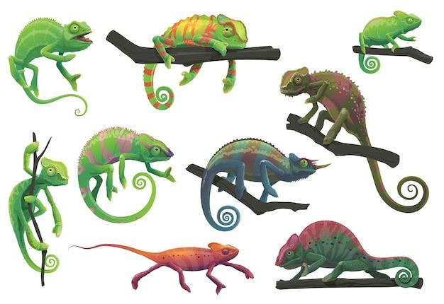 Lézards caméléons avec des branches d'arbres vector set avec des animaux de reptiles de dessin animé de panthère, jackson, caméléon voilé, vert et rouge dans différentes poses. lézards avec peau de camouflage, faune tropicale