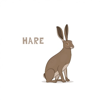 Un lièvre de dessin animé, isolé. alphabet animal.