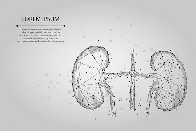 Ligne de purée abstraite et points de reins humains. système de médecine d'urologie traitement illustration low poly
