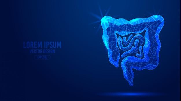 Lignes géométriques du tractus gastro-intestinal, modèle de bannière filaire de style low poly.