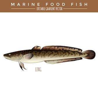 Lingue. poissons marins