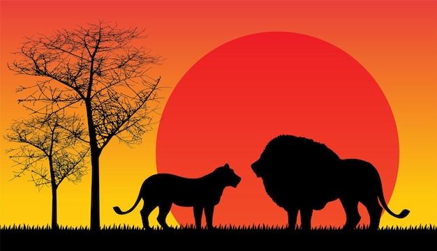 Lion coucher de soleil en afrique