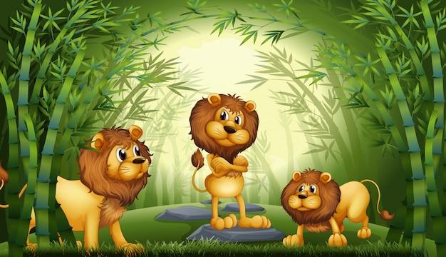 Lion dans la forêt de bambous