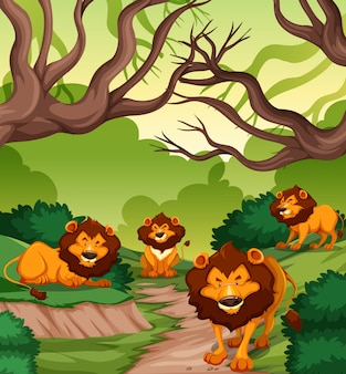 Lion dans la forêt