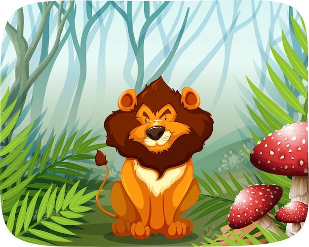 Lion dans la nature