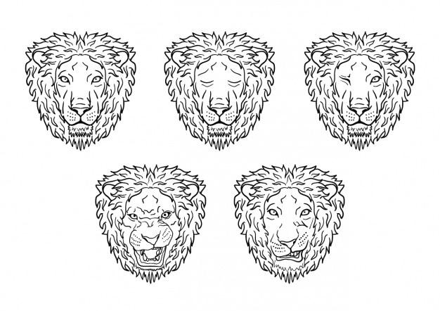 Lion dirige la collection