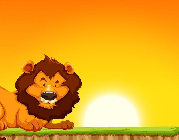 Lion sur fond de coucher de soleil