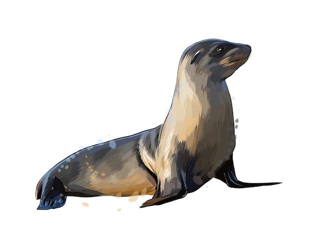 Lion de mer, joint d'une éclaboussure d'aquarelle, dessin coloré, réaliste.