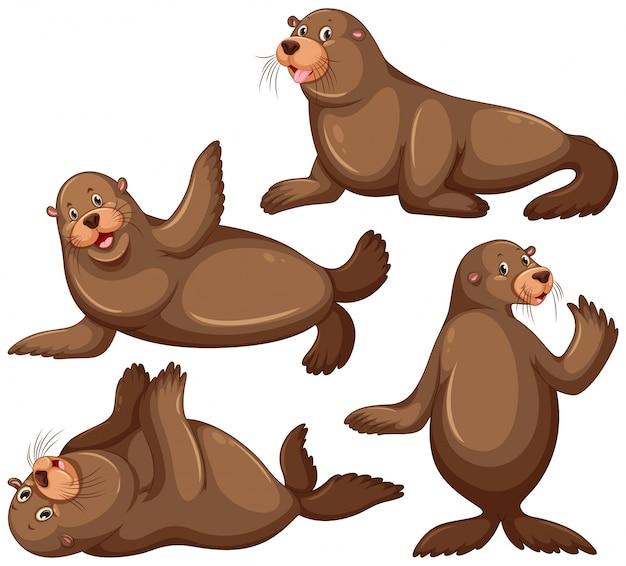 Lion de mer en quatre illustrations de poses