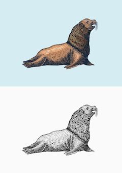 Lion de mer de steller créatures marines phoque à fourrure anima nautique ou pinnipèdes signes rétro vintage doodle