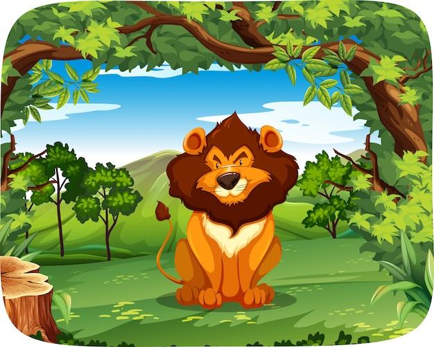 Lion sur la scène de la nature