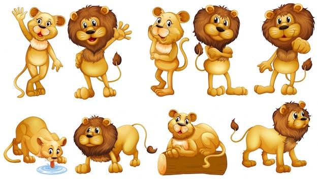 Lions dans différentes actions illustration