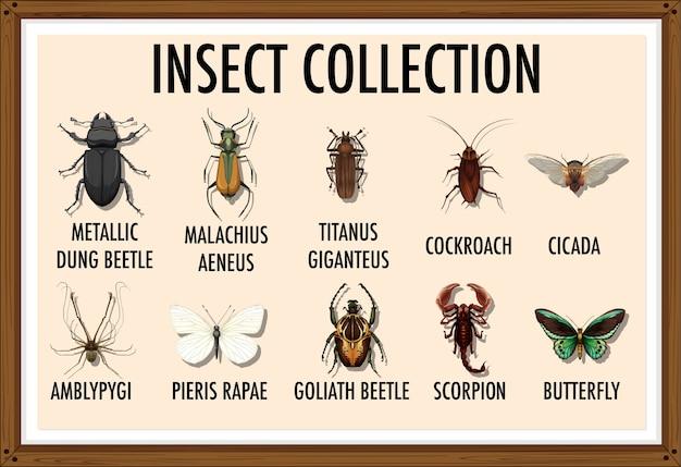 Liste d'entomologie de la collection d'insectes