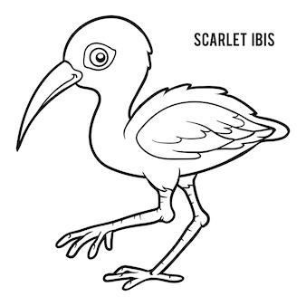 Livre De Coloriage Pour Enfants, Ibis écarlate Vecteur Premium