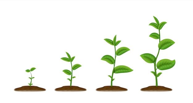 Llustration croquis jeune agriculture vert poussent à partir du sol printemps