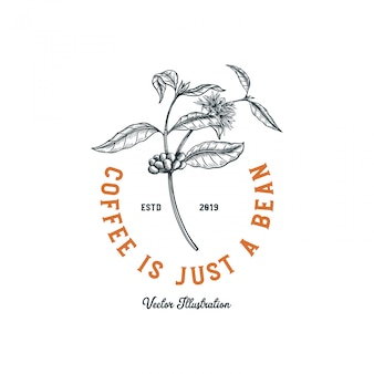 Logo de café, arbre à café avec fleur et haricot pour la création de logo