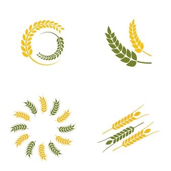 Logo paddy de blé