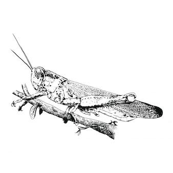 Logo de sauterelle