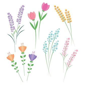 Longue tige de fleur