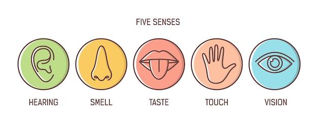 Lot de 5 sens
