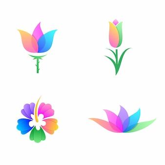 Lot de fleurs colorées