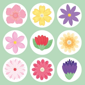 Lot de neuf fleurs de beauté printemps saison set icônes illustration