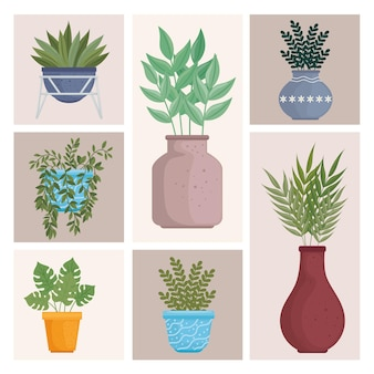 Lot de plantes icônes