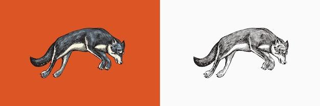Loup gris une bête prédatrice animal sauvage de la forêt sautant vecteur gravé à la main vintage vieux