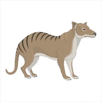 Loup marsupial sauvage