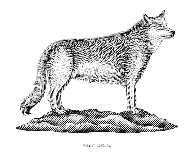 Loup noir et blanc dans le style de gravure