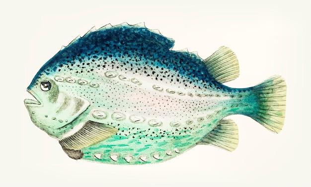 Lumpfish vert océanique dessiné à la main