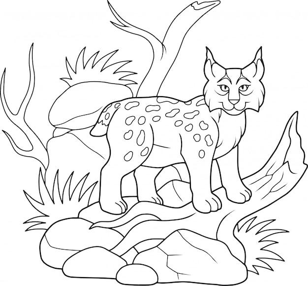 Lynx sauvage