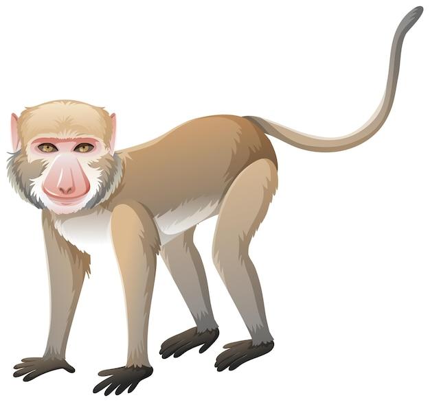 Macaque crabier en style cartoon sur fond blanc