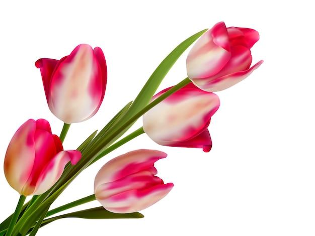 Magnifique bouquet de tulipes sur fond blanc.