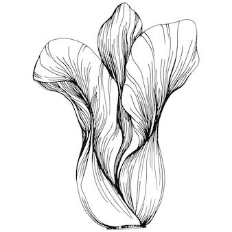 Main de chou dessin illustration vectorielle de croquis. objet de style gravé végétal isolé. le meilleur pour la conception de logo, menu, étiquette, icône, timbre. style vintage.