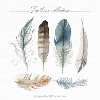 Main la collecte des plumes peintes