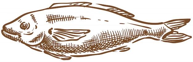 Main de croquis de poisson saumon vectoriel dessin