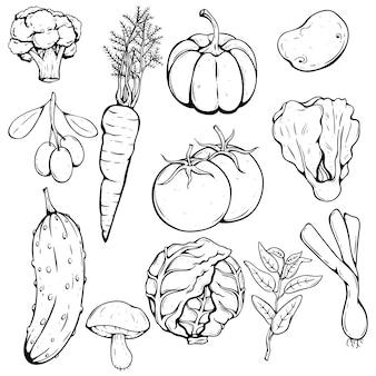 Main dessin ensemble de légumes frais avec tomate, citrouille, chou