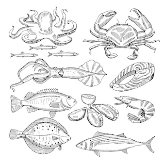 Main, dessin d'illustrations vectorielles de fruits de mer pour le menu du restaurant