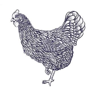 Main, dessin, poulet, illustration