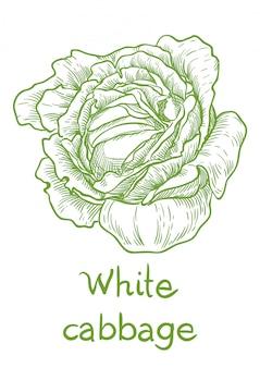 Main de dessin vectoriel chou blanc